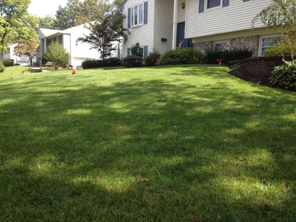 This album shows some photos of the lawns we treat in your area.